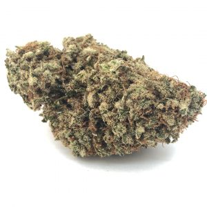 Exodus Cheese marijuana strain