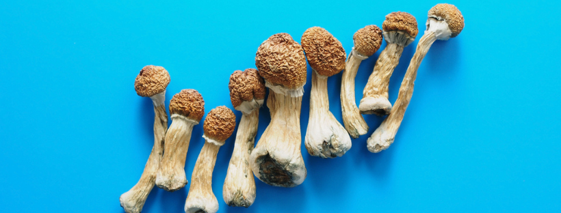 What Effects Do Magic Mushrooms Have
